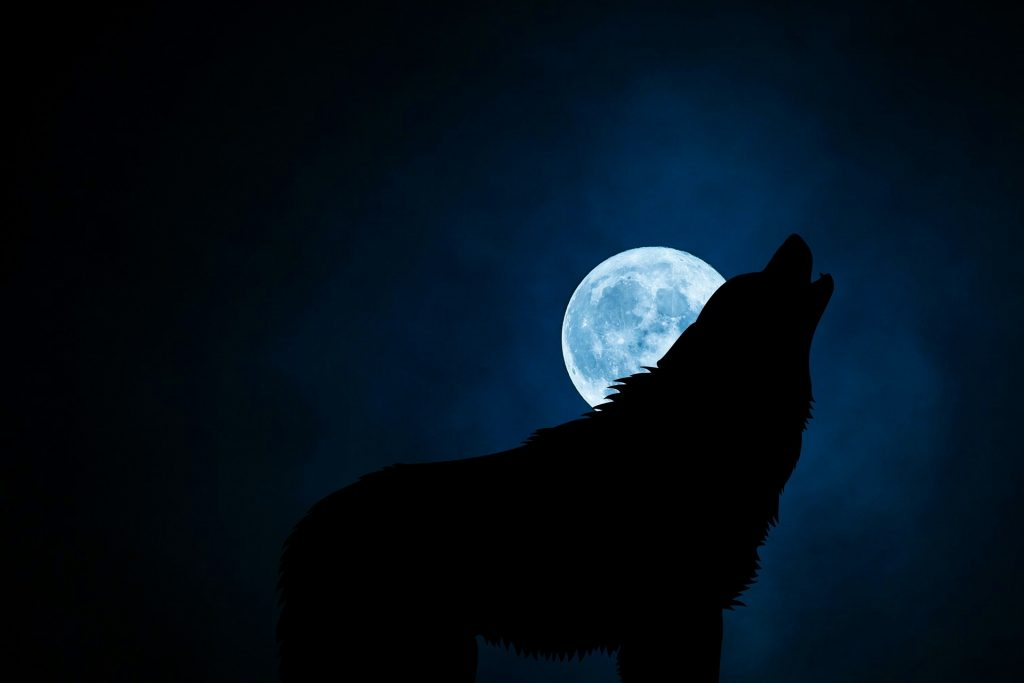 hombre lobo y luna llena