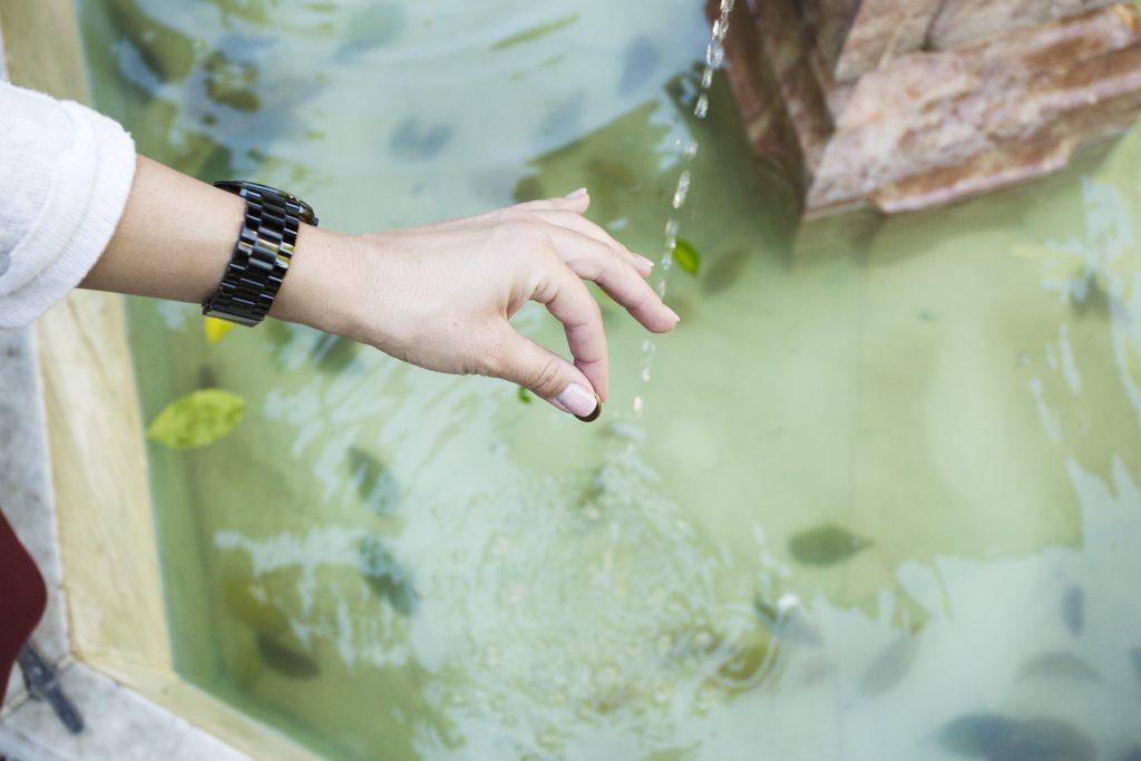 el agua y los deseos