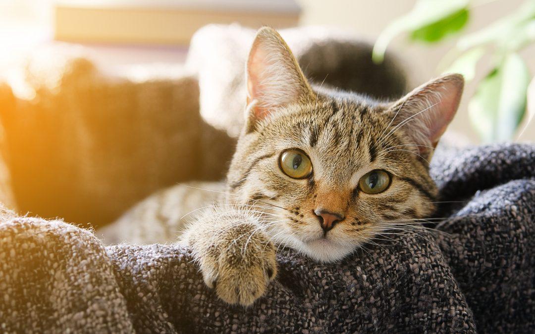 Los gatos en el esoterismo