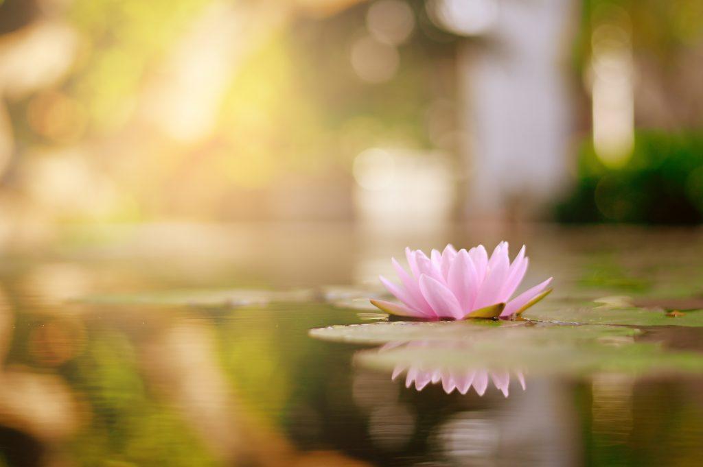 propiedades mágicas de la flor de loto